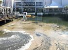 A LONG, brown streak working its way up Cornmeal Creek and through the heart of Sunshine Plaza is no cause for concern, Maroochy Waterwatch says.
