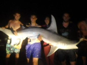 Shark fishing at Inskip Point - 8ft Hammerhead shark