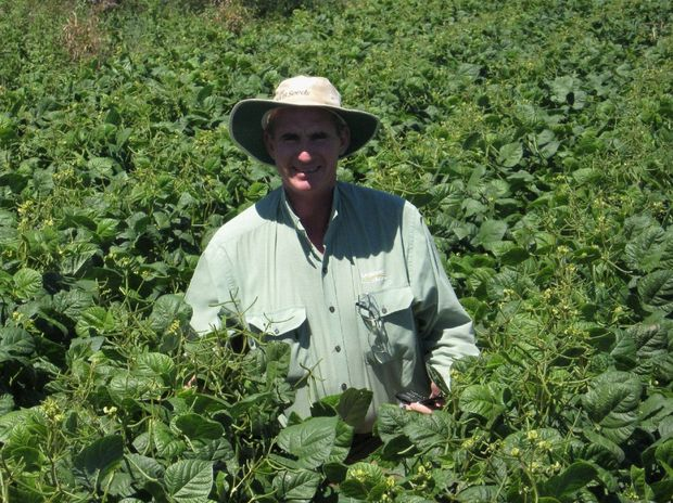 Paul McIntosh checks a paddock of mung beans.