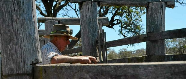 ON THE RAIL: Greymare cattleman Denis Ryan is anxiously waiting on rain.