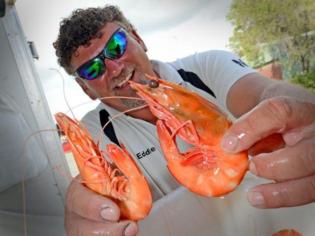 Eddie Kurz from Outlaw Seafood Australia with some fresh Tweed Prawns Photo: Blainey Woodham / Daily News
