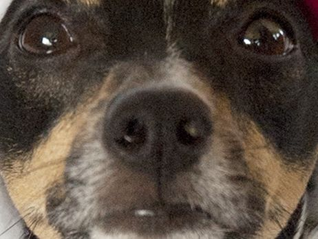 "A ""scary"" dog is being investigated by Sunshine Coast Council."