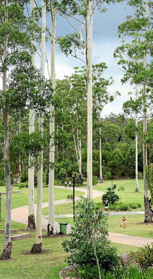 SERENE SCENE: The path winds among the gum trees at Robelle Domain in Springfield Central.