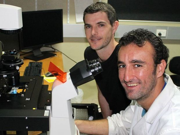 Dr Scott Cummins and Jorge Amat-Fernandez with the new $250,000 microscope in the USC laboratory.