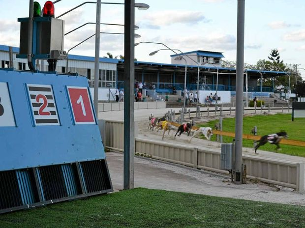 The greyhounds round the first bend for their second lap of the Grafton racetrack. PHOTO: PATRICK ALLEN
