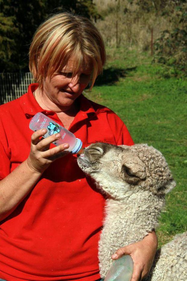 Abbie Veivers and Humphrey the camel at Serendipity Farm Animal Centre.