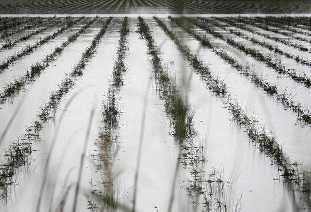A farm paddock on Tweed Valley Way near Tumbulgum.