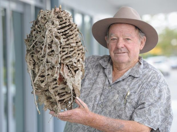 Bob Bell from Booral with the paper wasp nest he found on his two-hectare property.