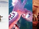 Viral videos of the week - Feb 27, 2013