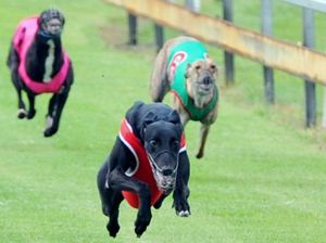 Thousands rally to mourn dead greyhounds