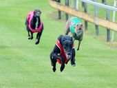 AROUND 18,000 greyhounds are discarded by the Australian greyhound racing industry each year, and a group is calling for them to be turned into shoes.