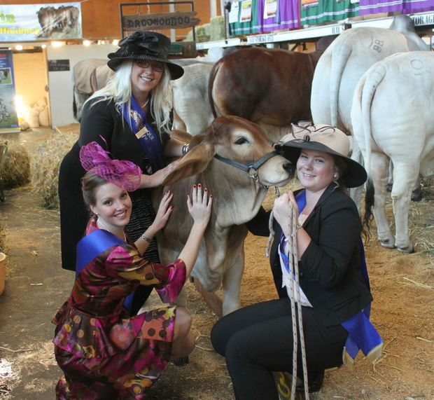 Image for sale: Central and North Western Miss Showgirl Rylee Usher, Cloncurry; South-East Queensland Miss Showgirl Jane Lillingstone, Gold Coast and South Burnett Miss Showgirl Tamara Birrer, Nanango get friendly with Whitaker Zennia, Munduberra during the Ekka. Photo Kathleen Calderwood / The Rural Weekly