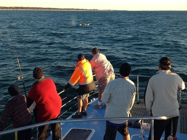 The first reported whale of the season in Hervey Bay has been spotted by a group on a trip with Freedom Whale Watch Fishing and Dive Charters.