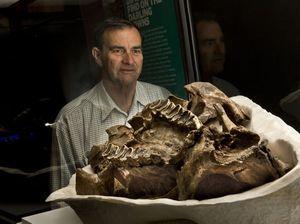 Diprotodon skull at Cobb+Co Museum