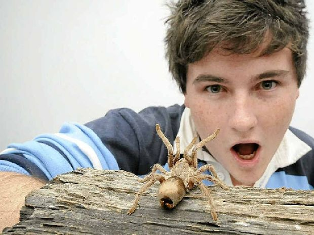 UP CLOSE AND PERSONAL: Brandon Gifford of Casino, sleek geek and Eureka Prize winner for his video Spectacular Spider starring Fango the bird-eating spider.