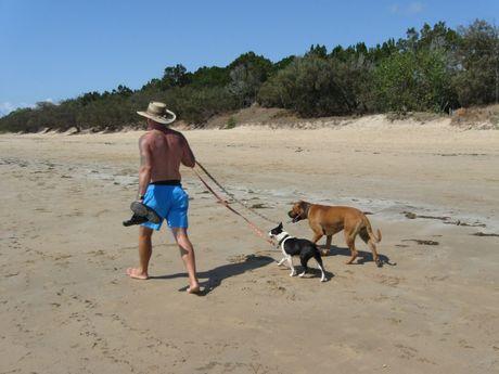 The bull mastiff and boston terrier involved in the dog attack at Urangan beach.