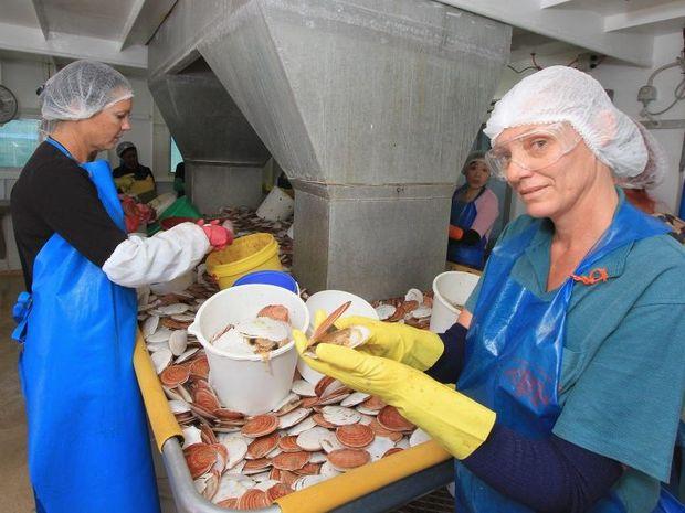 Kelli Smyth and Judy Perdikis shucking scallops at Urangan harbour.