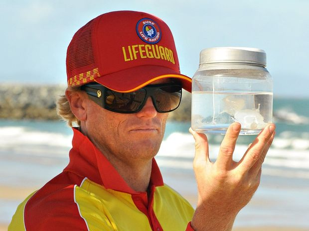 Lifeguard Greg Willey looking at a box jelly fish at the Mackay Harbour beach.