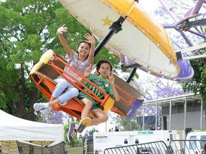 Jacaranda Festival backed by council