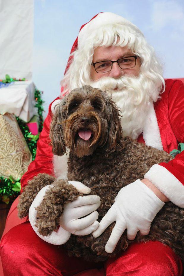 pets snapped on santa s knee help refuge fraser coast