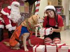 Santa Claus and his elf Jehsika Peacock with guide dog in-training Ivy encourage customers of Myer to donate to Guide Dogs Queensland by using the Christmas gift wrapping service, Tuesday, December 03, 2013. Photo Kevin Farmer / The Chronicle
