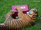 Big names beaten by Australia Zoo at annual awards