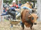 Relax, it's just a bucking bull!