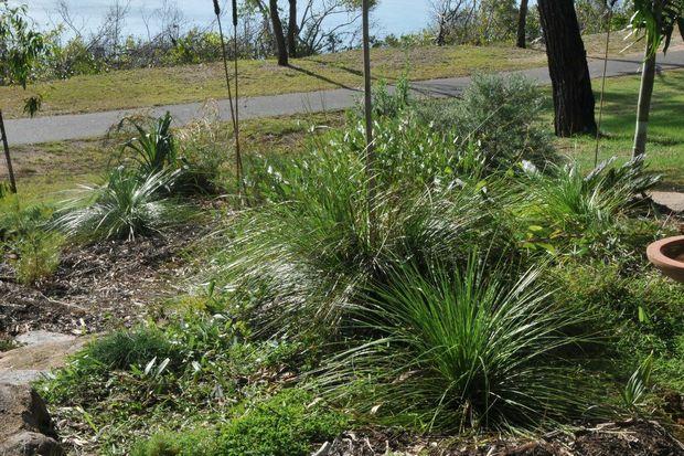 The garden which is under threat.