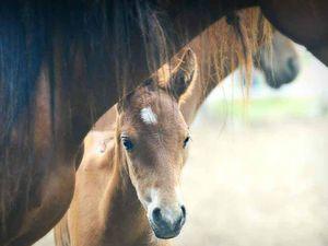 Horse on the loose in Bundamba