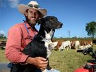 Central Queensland farmers rejoice at rain over weekend
