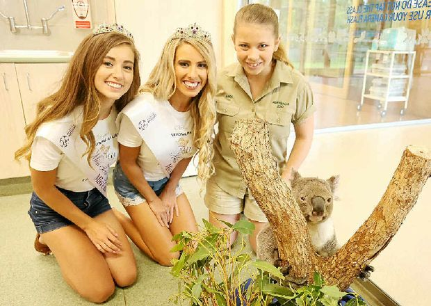 PERSONAL TOUR: Bindi Irwin shows Australia Galaxy Pageant winners Jasmine Glenister (left) and Kellie Germain an injured koala at Australia Zoo Wildlife Hospital.