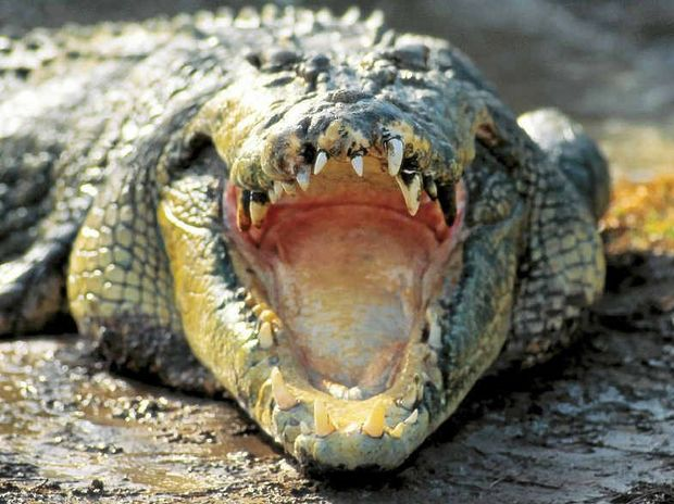 CROC WARNING: Authorities placed croc warning signs along the Boyne River in Tannum Sands and Boyne Island after a croc was spotted.