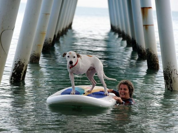 Dudley may only have three legs but that doesn't stop him from enjoying all aspects of a dog's life. He is pictured with his guardian Maria Barnes on a paddle board at Scarness. Photo: Robyne Cuerel / Fraser Coast Chronicle