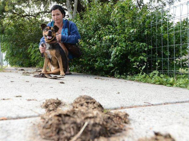 Jodie Bliss with her dog Jala walking past horse poo on a footpath at Stafford Street, Silkstone. Jodie is not happy that horse owners aren't cleaning up the mess from their horse when they are allowed to ride them in public.