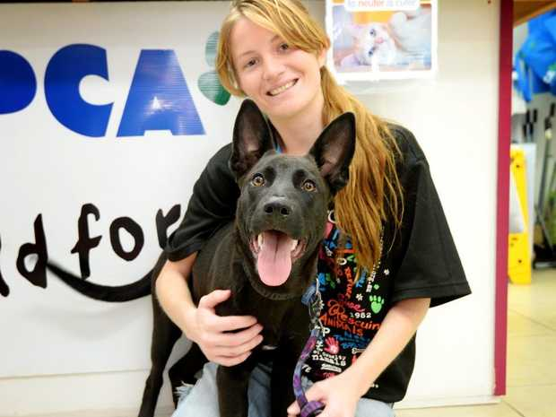 RSPCA's Chanell Denning with Alex, one of the dogs up for adoption. Photo Allan Reinikka / The Morning Bulletin