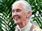 Dr Jane Goodall to be honoured at Australia Zoo next Sunday