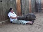 Orphaned baby rhino refuses to sleep alone
