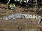 Missing croc eggs presumed to be stolen