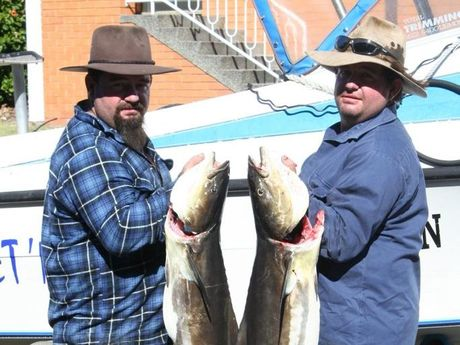 Twin brothers Brett and Scott Newton show off their heavyweight cobia catches at the Evans Head Fishing Classic, caught on Saturday. Scott's fish (right) weighed 11.9kg Photo: Hamish Broome / The Northern Star