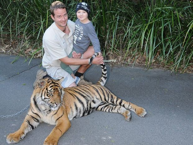 Arlo spent his day at Australia Zoo with Australia Zoo tigers Hunter (pictured) and Clarence, and conservation manager Giles Clark.