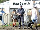Rock star's plea to MP: Save us from Splendour sniffer dogs
