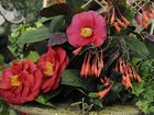 Camellia show at SQIT. Funds raised from the annual show go toward the Toowoomba Hospice.