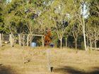 Vet seething after Hendra virus kills horse