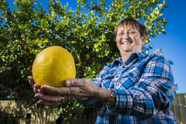 Nancy Janson was amazed at the size of one of the lemons that grew on her tree.