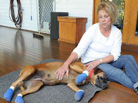Estelle Barnard says Sheena was scared when fireworks went off on Wednesday night and took off, injuring her paws.