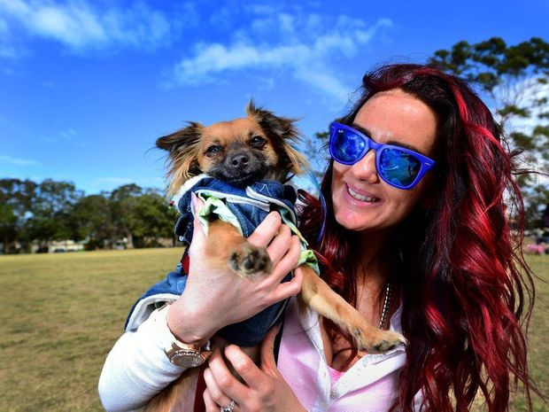 Melanie Flynn of Buderim with Chicheritto the 18-month old long haired chihuahua at the Woofstock Dog Expo, Mooloolaba State School. Photo: Iain Curry / Sunshine Coast Daily