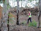 Koala actionist Natalie Richardson checks out the remaining Koala population at Henderson Park in Maryborough. Photo: Robyne Cuerel / Fraser Coast Chronicle