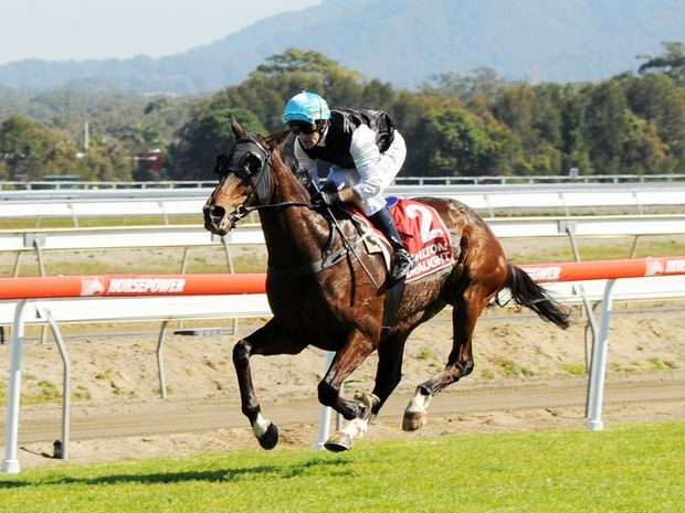 DOING IT EASY: Samsili bolted away in the straight to win the 2014 Ken Howard Cup by almost six lengths. Photo: Leigh Jensen / The Coffs Coast Advocate