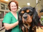 Pawkids dog groomer Melanie Ellerton takes care of Hugo. Photo Allan Reinikka / The Morning Bulletin