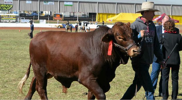 Lockyer Valley Mayor Steve Jones says he is confident the Gatton Show can be quickly moved from its current location.